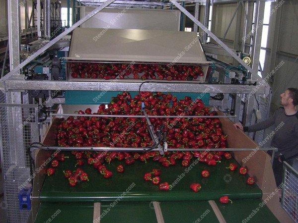 AGV paprika oogstwagen | Afbeelding 10