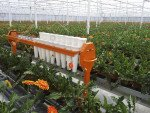 AGV gerbera harvest trolley | Image 5