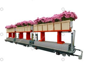 AGV gerbera harvest trolley