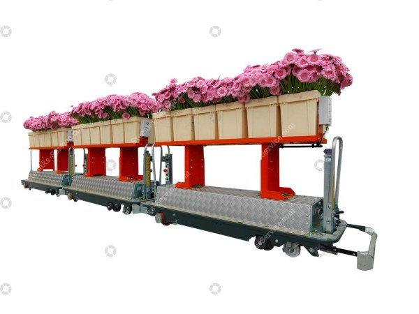 AGV gerbera harvest trolley