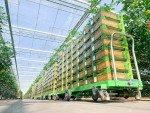 ErntewagenTomaten Greencart THC-L   Bild 6
