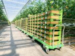 Harvest tomatoes trolley Greencart THC-L | Image 5