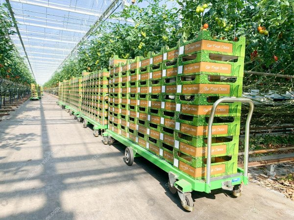 Tomaten oogstwagen Greencart THC-L | Afbeelding 5