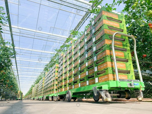 Tomaten oogstwagen Greencart THC-L | Afbeelding 6