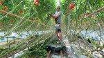 Bladplukwagen Greencart LPC | Afbeelding 7